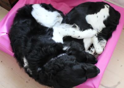 Far og datter sover søtt.   Amigo og Dundra