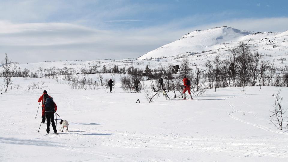 Limke på «Føring av hund i fjellet»-kurs